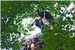Beide Jungen im Nest